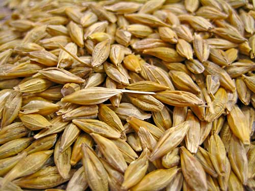 Barley Recipes for Natural Beauty