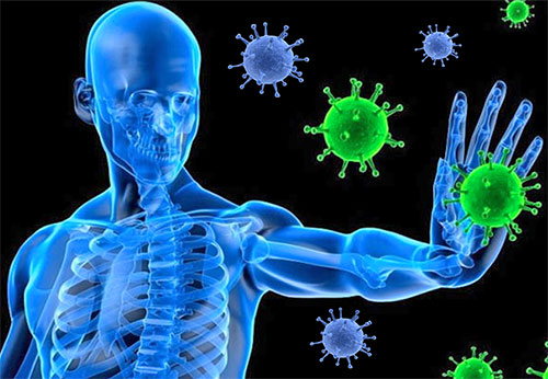 natural remedies to boost immune system with video by sachin goyal, Human Body