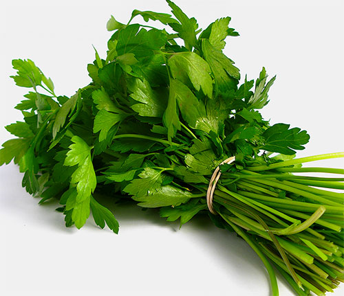Cilantro Benefits For Health With Video