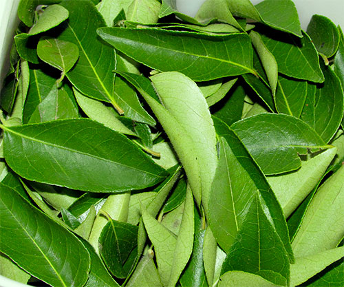 Curry Leaves Benefits For Health With Video